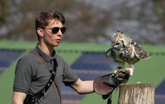 Dan Mercer flying a Great Horned Owl at the National Centre for Birds of Prey