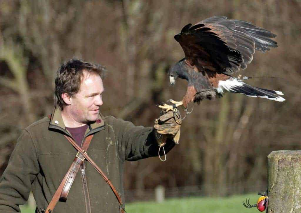 Charlie Heap at the National Centre for Birds of Prey, Duncombe Park, Helmsley UK