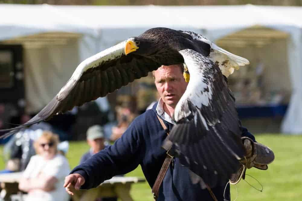 Charlie Heap and Steller's Sea Eagle at National Centre for Birds of Prey