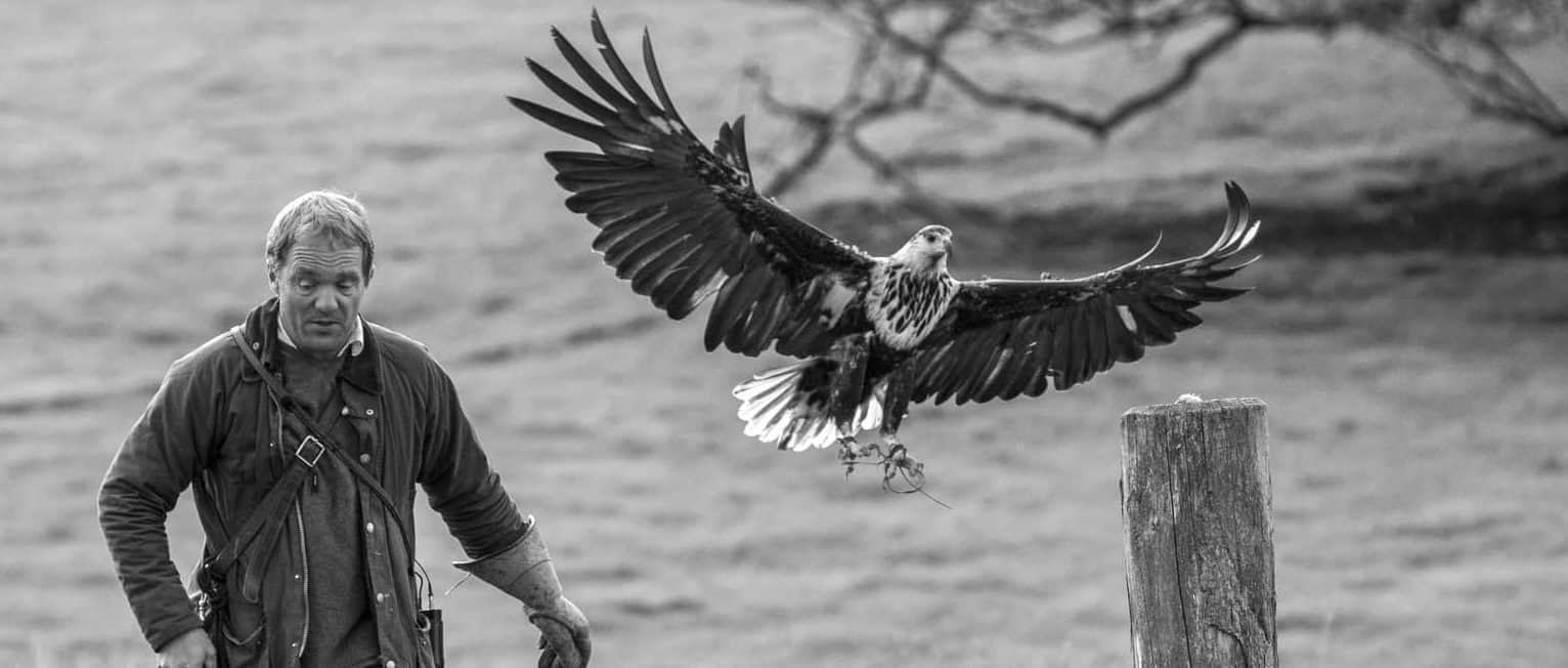 African Fish Eagle at National Centre for Birds of Prey