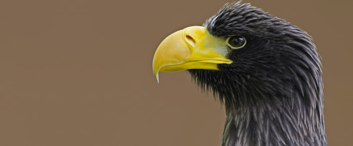 Stellar's Sea Eagle at National Centre for Birds of Prey